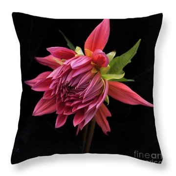 Dahlia 'wynn's King Salmon' Throw Pillow