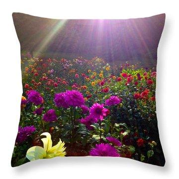 Dahlias Kissed By Sun-rays  Throw Pillow