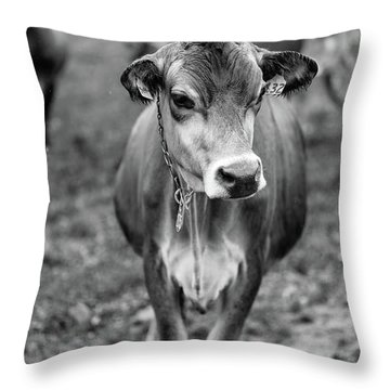 Dairy Cow On A Farm In Stowe Vermont Throw Pillow