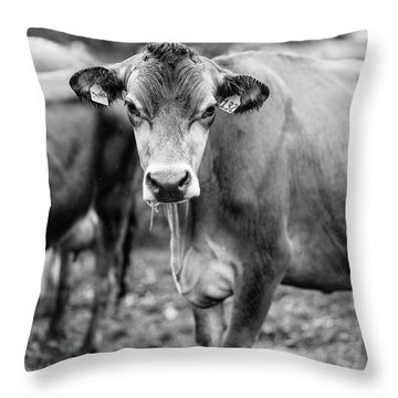 Dairy Cow On A Farm Stowe Vermont Black And White Throw Pillow