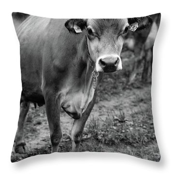Dairy Cow Stowe Vermont Black And White Throw Pillow