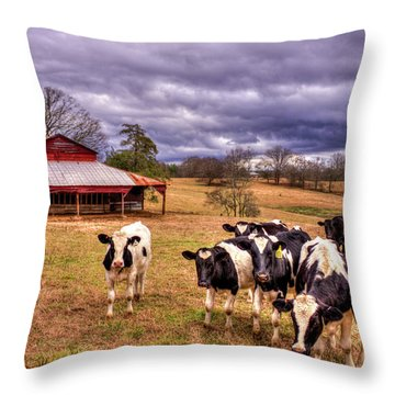 Dairy Heifer Groupies The Red Barn Art Throw Pillow