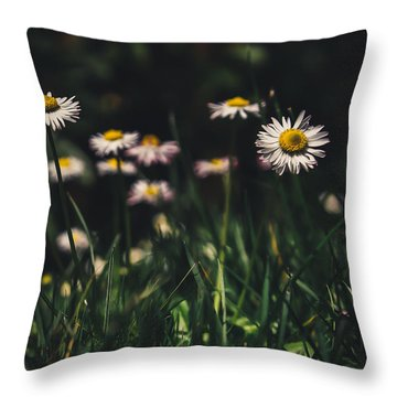 Daisies Throw Pillow by Cesare Bargiggia