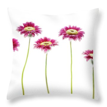 Throw Pillow featuring the photograph Daisies In A Row by Rebecca Cozart