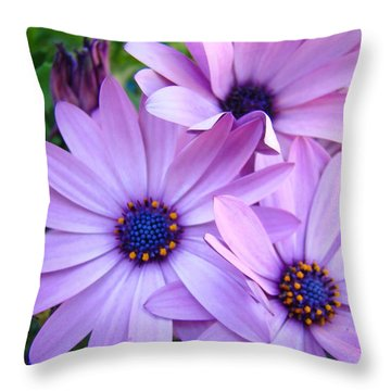Daisies Lavender Purple Daisy Flowers Baslee Troutman Throw Pillow by Baslee Troutman