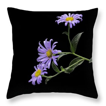Daisies On Black Throw Pillow