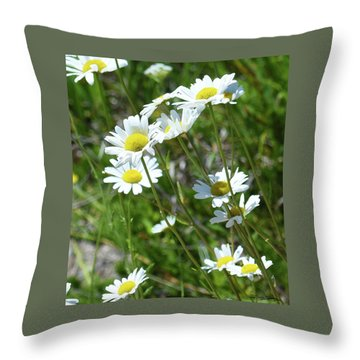 Throw Pillow featuring the photograph Daisies Popping Up Everywhere by Sally Sperry