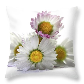 Daisies Throw Pillow by Terri Waters