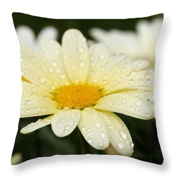 Throw Pillow featuring the photograph Daisy After Shower by Angela Rath