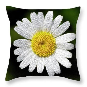 Daisy And Dew Throw Pillow by Rob Graham