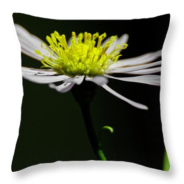 Daisy Center Stage Throw Pillow