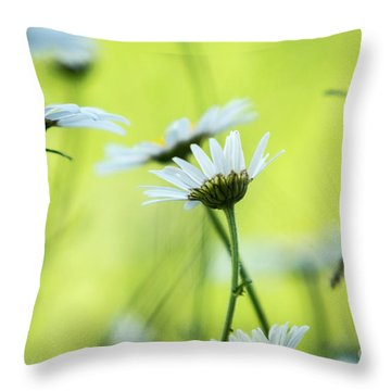 Daisy Collection  Throw Pillow