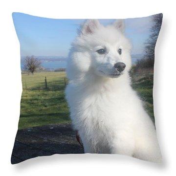 Daisy Throw Pillow by David Grant