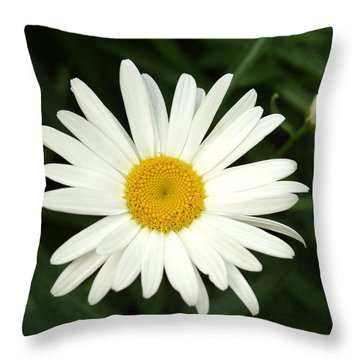 Daisy Days Throw Pillow by Carol Sweetwood