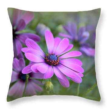 African Daisy Throw Pillows