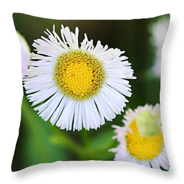 Daisy Fleabane Throw Pillow