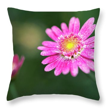 Throw Pillow featuring the photograph Daisy Flower by Pradeep Raja Prints