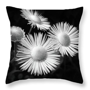 Throw Pillow featuring the photograph Daisy Flowers Black And White by Christina Rollo