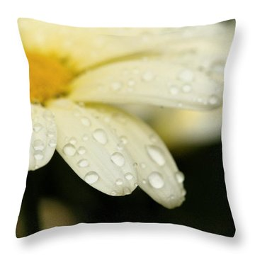 Throw Pillow featuring the photograph Daisy In Spring by Angela Rath