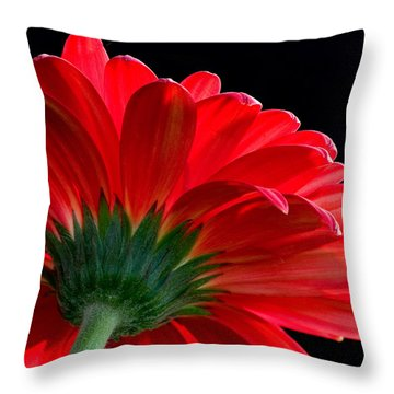 Daisy In The Sun Throw Pillow