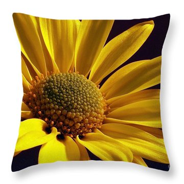 Daisy Throw Pillow by Lois Bryan