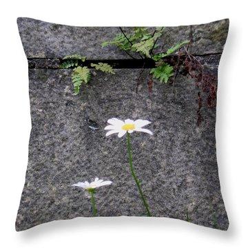 Daisy Loves Fern Throw Pillow
