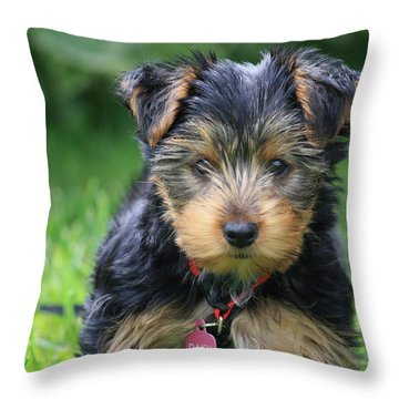 Daisy Throw Pillow by Mary-Lee Sanders