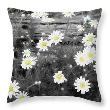 Throw Pillow featuring the photograph Daisy Patch by Benanne Stiens