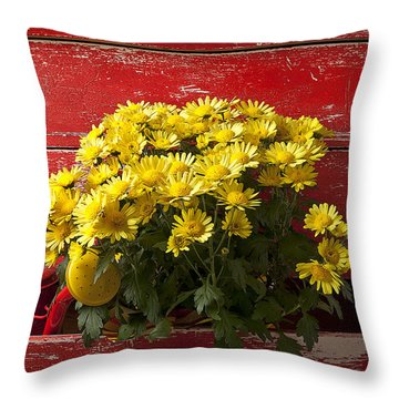 Daisy Plant In Drawers Throw Pillow by Garry Gay