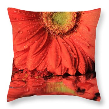 Daisy Reflections Throw Pillow