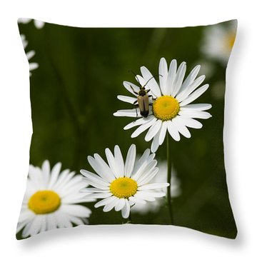 Daisy Visitor Throw Pillow