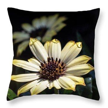 Daisydrops Throw Pillow