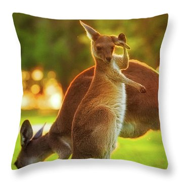 Damn Flies, Yanchep National Park Throw Pillow by Dave Catley