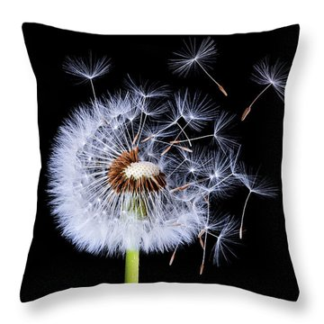 Dandelion Blowing On Black Background Throw Pillow