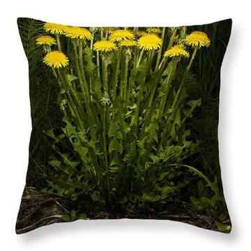 Dandelion Clump Throw Pillow
