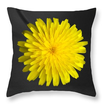Dandelion Throw Pillow by Holly Kempe