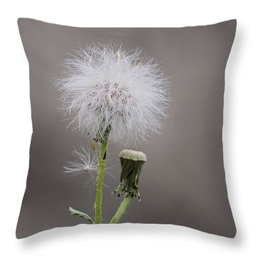 Throw Pillow featuring the photograph Dandelion Seed Head by Rona Black