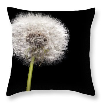 Dandelion Seedhead Throw Pillow by Steve Gadomski