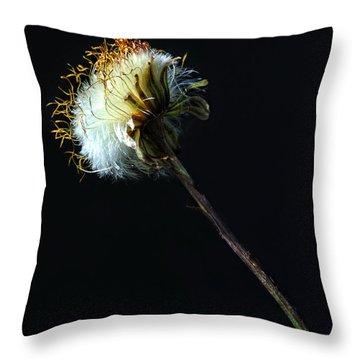 Dandelion Silhouette Throw Pillow by Edward Sobuta