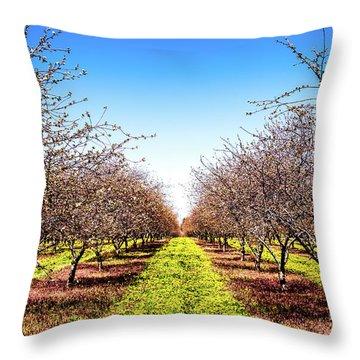 Dandelion Stripes Throw Pillow by Onyonet  Photo Studios