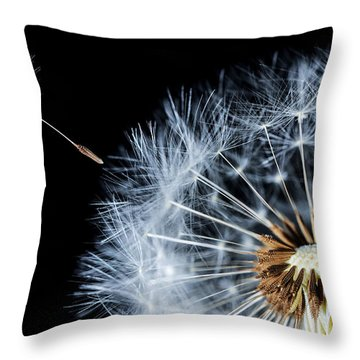Throw Pillow featuring the pyrography Dandy by Bess Hamiti