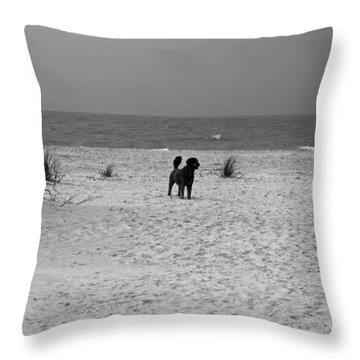 Dandy On The Beach Throw Pillow by Michiale Schneider