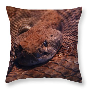 Dangerously Handsome Throw Pillow by Linda Shafer