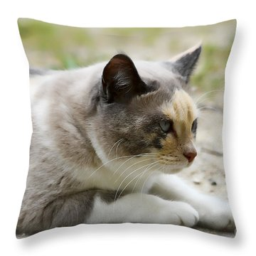 Danni Girl 2 Throw Pillow by Teresa Zieba