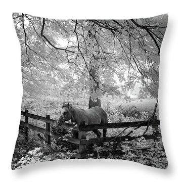 Dapple Faced Horse I Throw Pillow