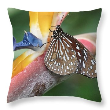 Throw Pillow featuring the photograph Dark Blue Tiger Butterfly - 1 by Paul Gulliver