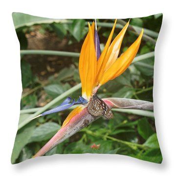 Throw Pillow featuring the photograph Dark Blue Tiger Butterfly - 2 by Paul Gulliver