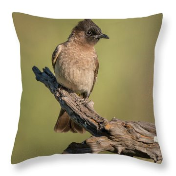 Dark-capped Bulbul Throw Pillow