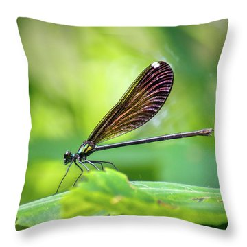 Throw Pillow featuring the photograph Dark Damsel by Bill Pevlor