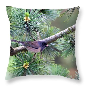 Dark-eyed Junco On A Pine Tree Throw Pillow by David Gn